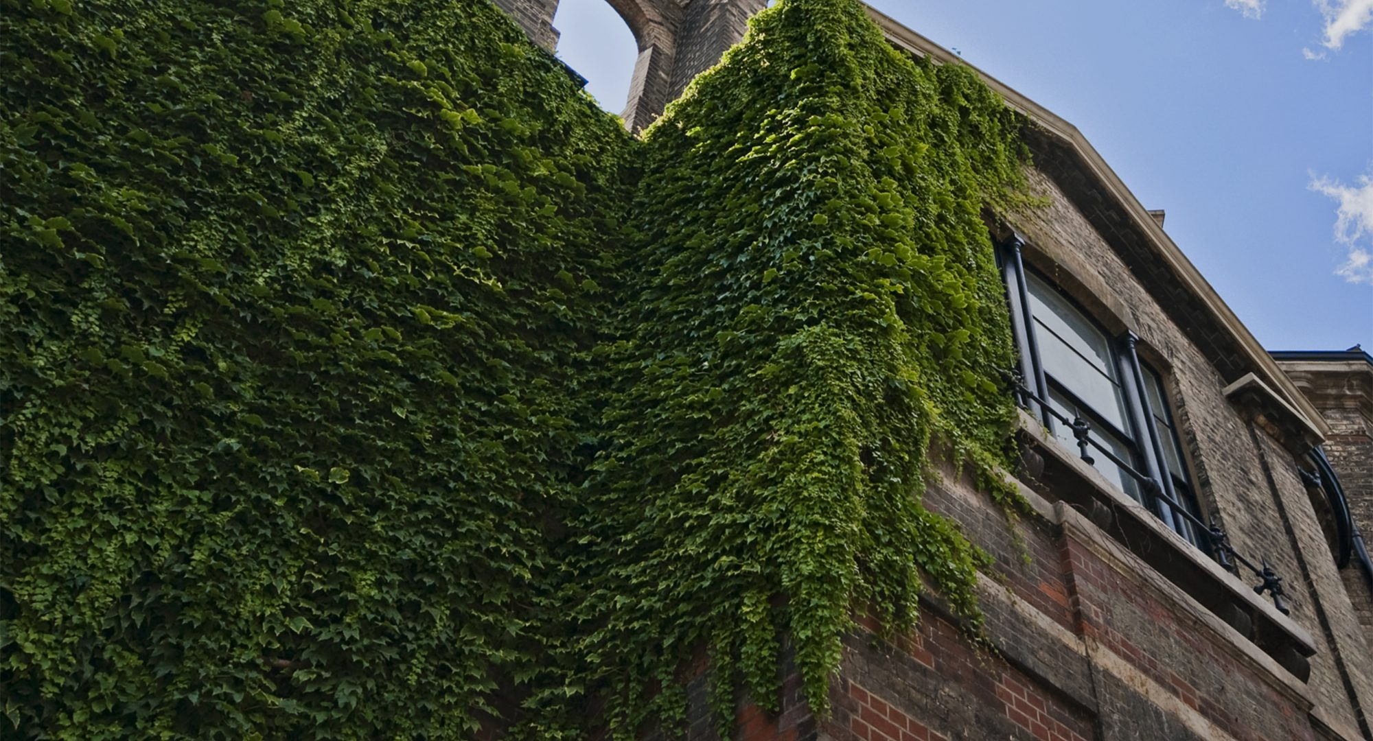 image shot from a low angle, showing part of the outside architecture of the Seale Hayne hospital, with ivy growing up the wall